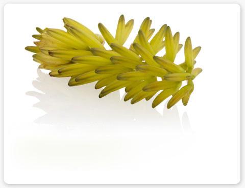 Aloe: ingrediënt Aveda